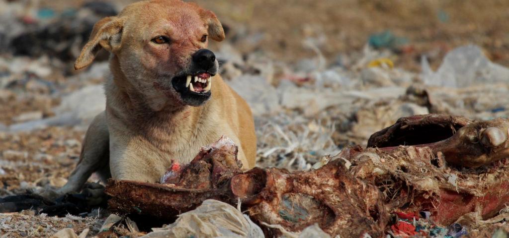 Собака лает в никуда: примета, предвещающая смерть