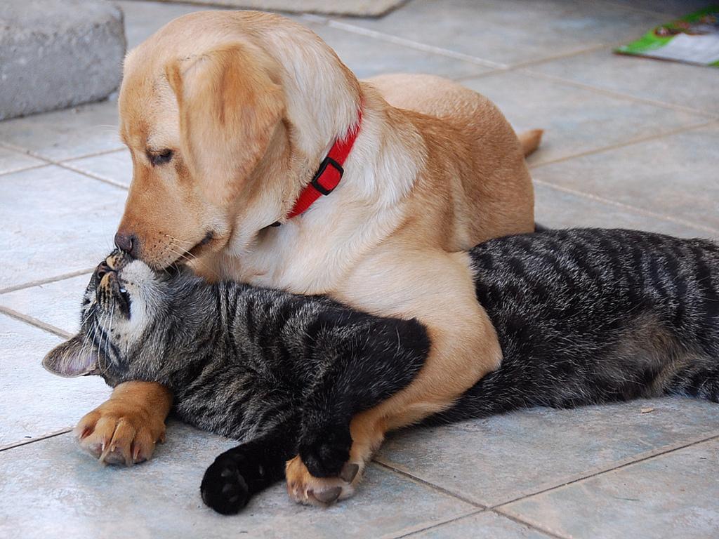 Почему собаки не любят кошек: миф или реальность