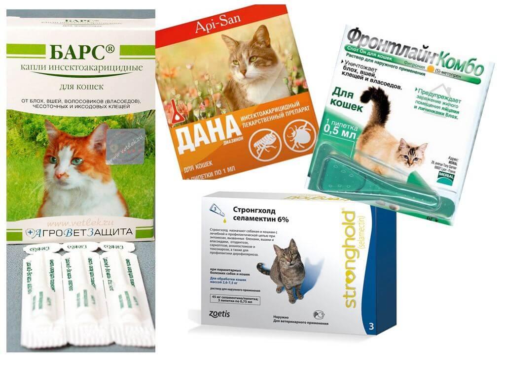 Как размножаются блохи у кошек и 5 эффективных средств от блох