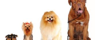 Классификация собак