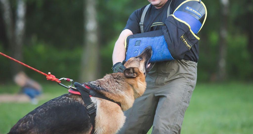 ОКД для собак или общий курс дрессировки
