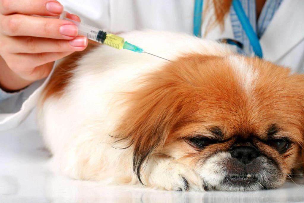 Как правильно сделать укол собаке