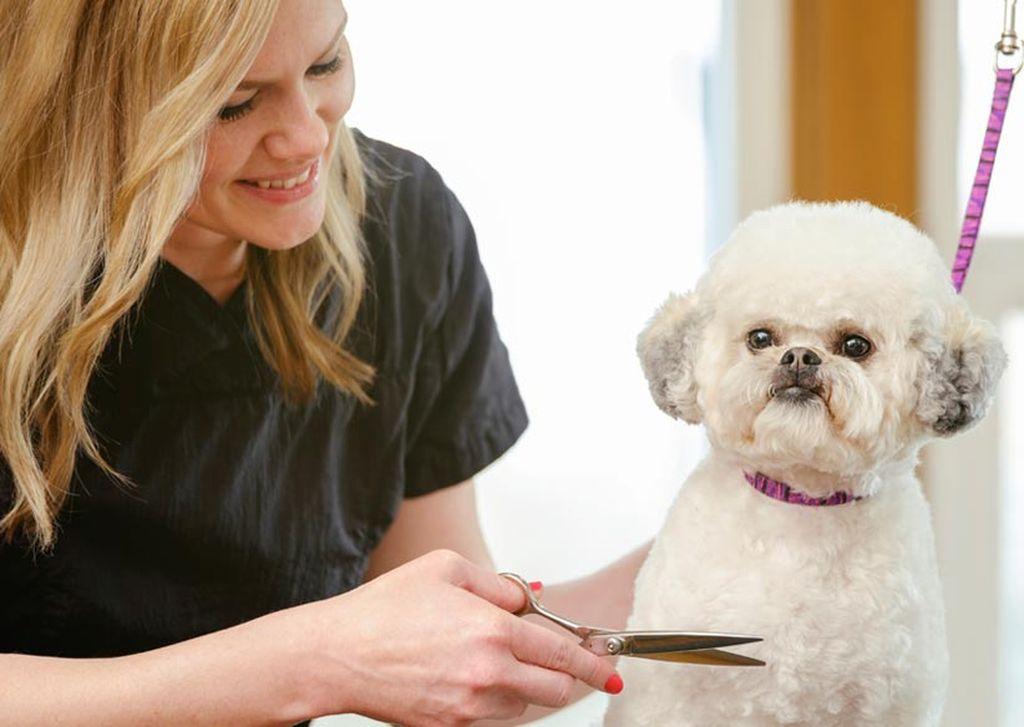 Очень важно внимательно следить за состоянием шерсти собаки