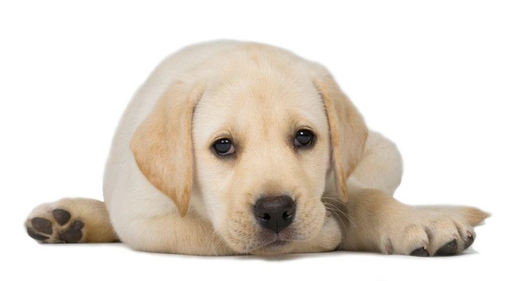 Причины и лечение недержания мочи у собаки