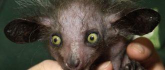 15 лучших экзотических домашних животных