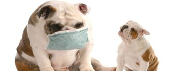Почему собаки начинают фыркать и чихать, причины и как лечить