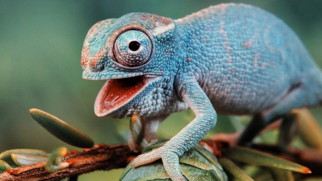 Хамелеон — ящерица, которая способна менять окраску туловища