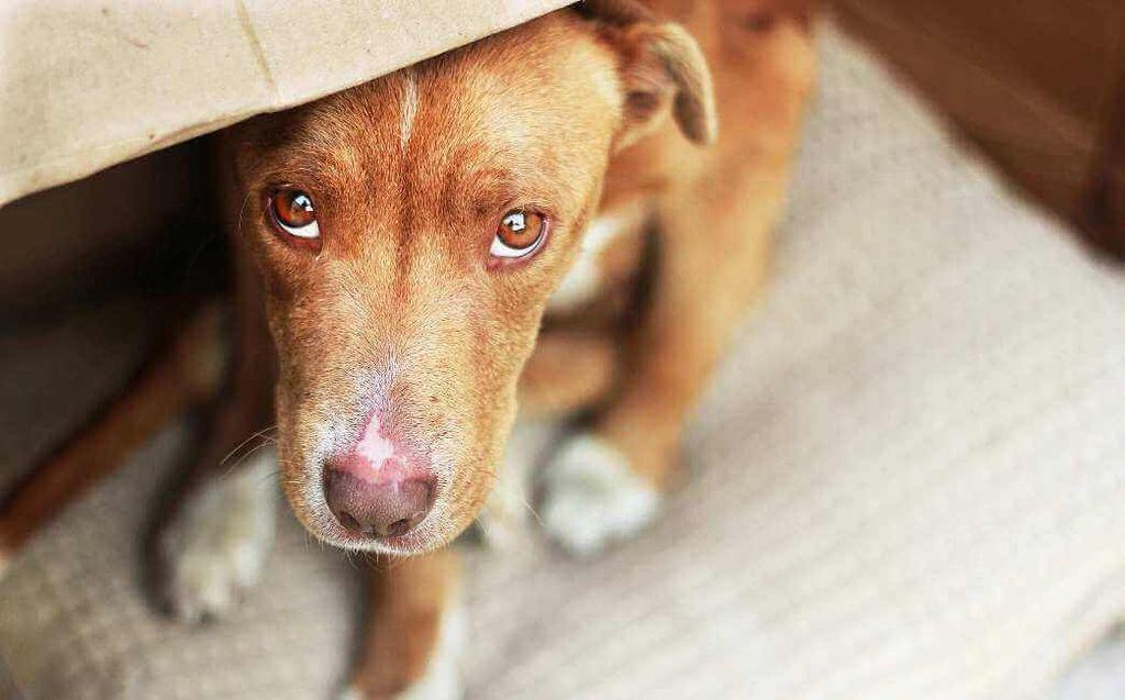 Как наказывать собаку