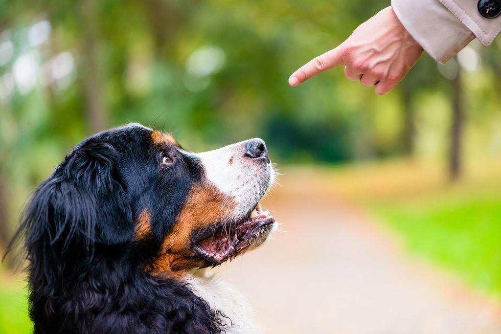 Нельзя ругать собаку по настроению