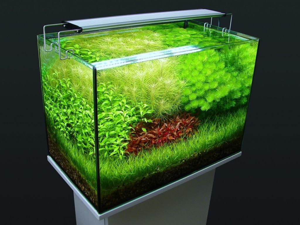 Лампа для освещения крепится посередине аквариума