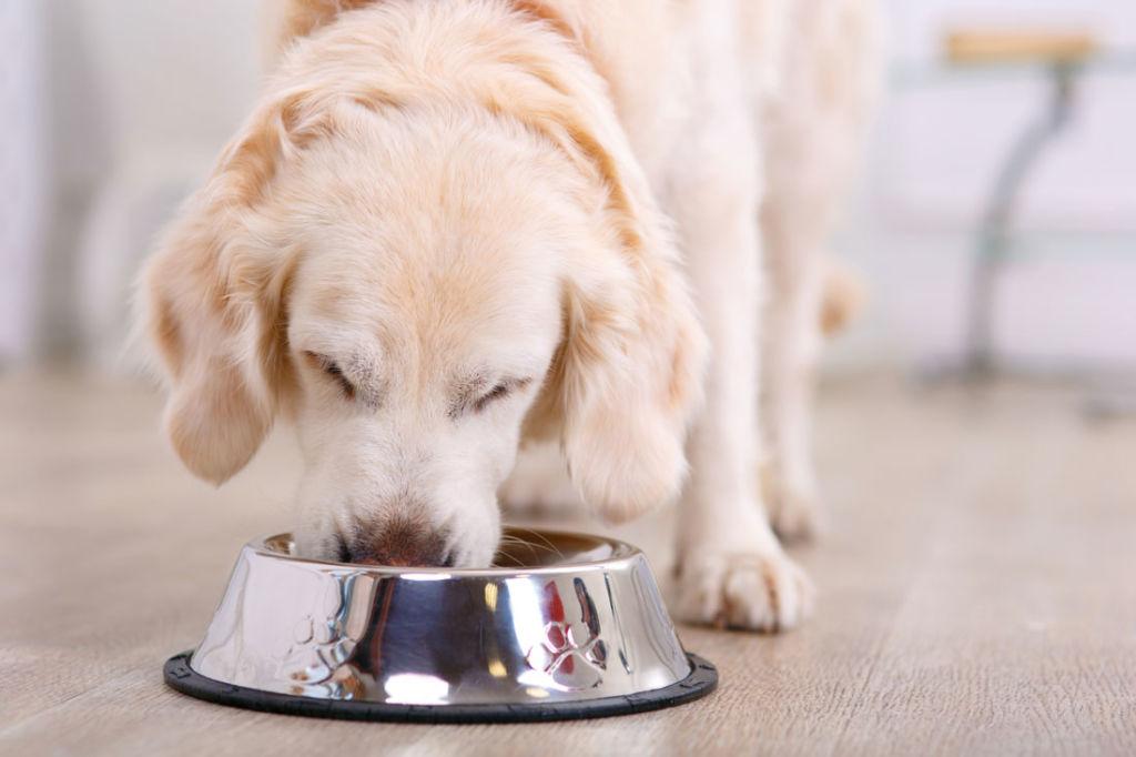 Как правильно давать щенкам сухой корм и когда можно начинать
