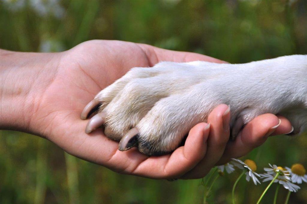 Собачья лапа состоит из когтей, пальцев и подушечек
