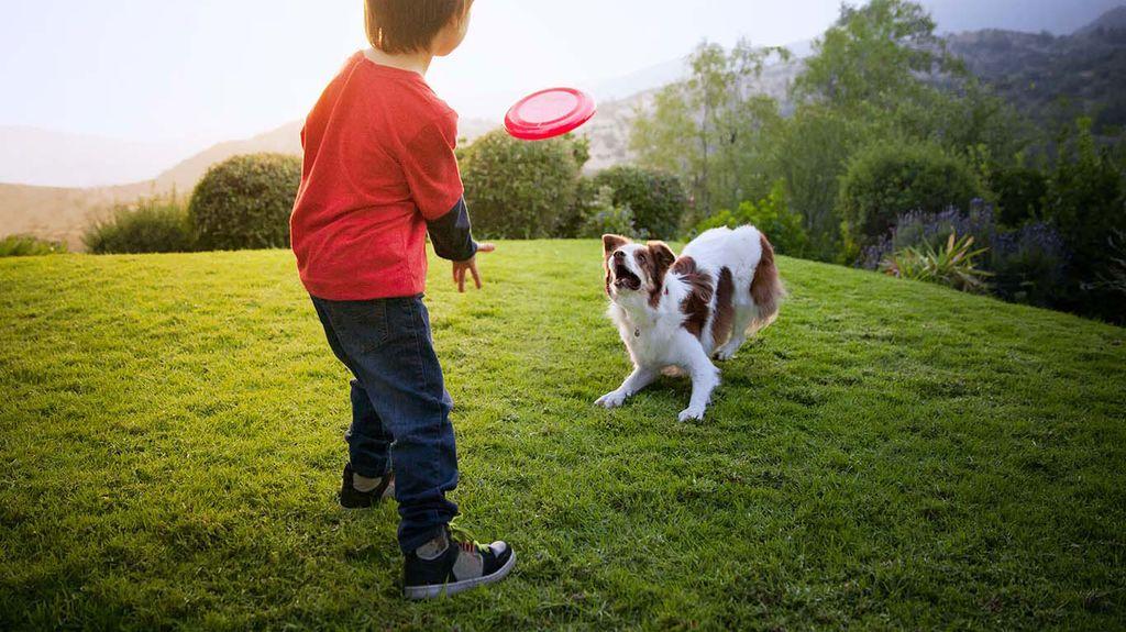 Если собака прижимается к земле и виляет хвостом - она хочет играть