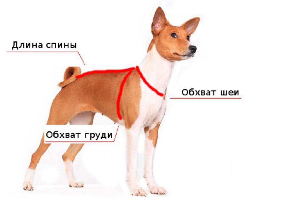 Как сшить попону для собаки своими руками