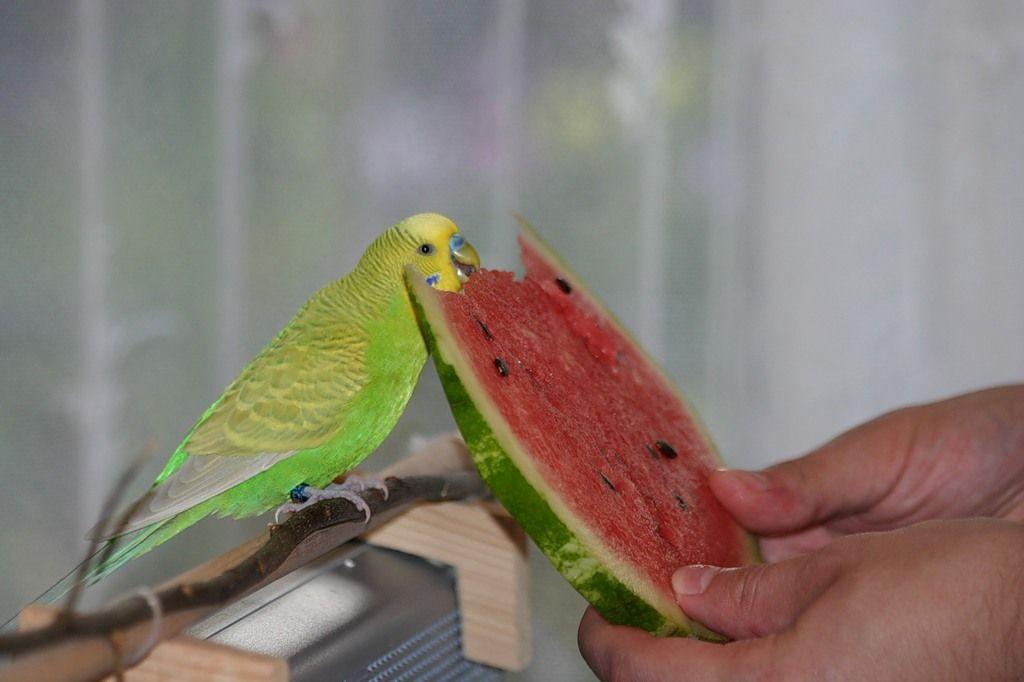 Питание во время размножения птиц должно быть обязательно качественным и сбалансированным