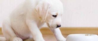 Что делать если щенок не набирает вес на сухом корме