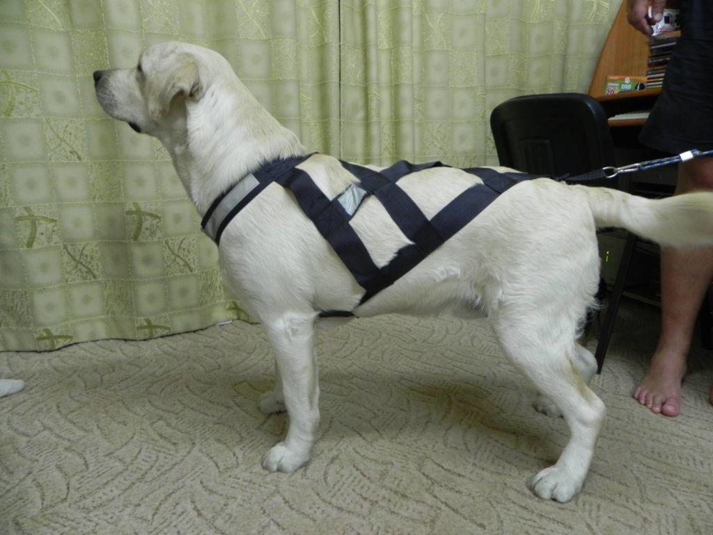 Как сделать правильную шлейку для собак своими руками