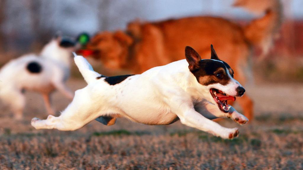 3 причины, почему у собаки текут слюни изо рта, симптомы и лечение
