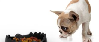 Состав корма для собак, сравнительная характеристика и мнение специалиста