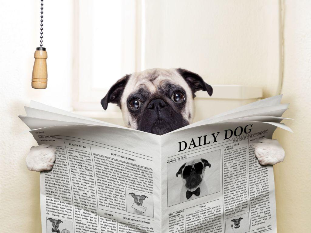 Что делать, когда у щенка или взрослой собаки понос?