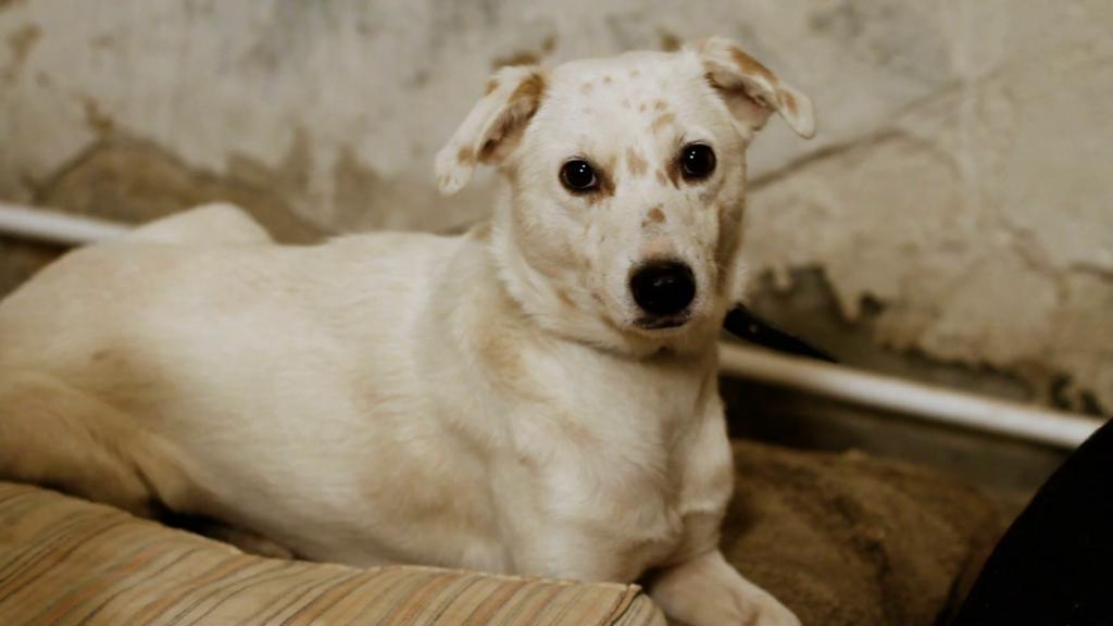Собаки дворняжки и что делать, если вы решили взять беспородную собаку