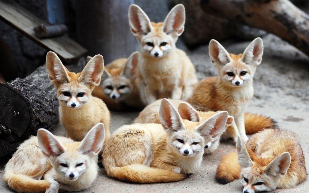 Животные обитают небольшими группами