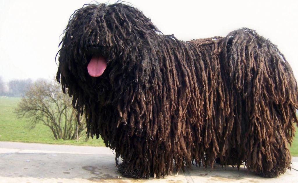 Породы собак без подшерстка и запаха