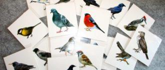 21 вид птиц России — их название и описание