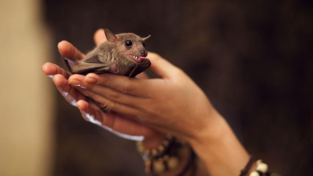 Летучая мышь нуждается в ежедневных прогулках
