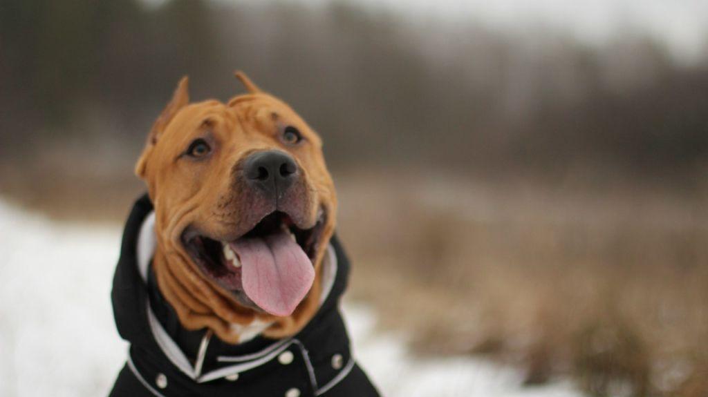 Опытные собаководы утверждают, что значение кличек собак очень важно, что она несет скрытый смысл