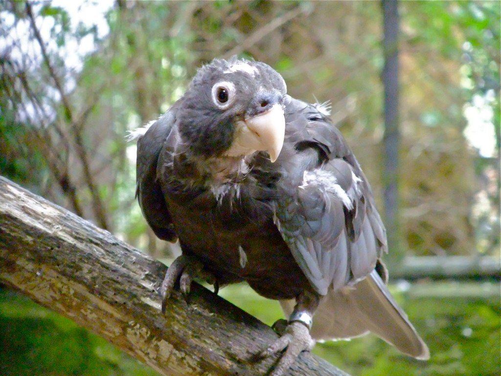 Большой попугай-ваза