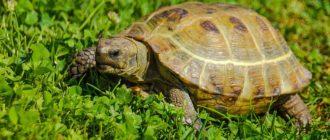От чего умирают черепахи