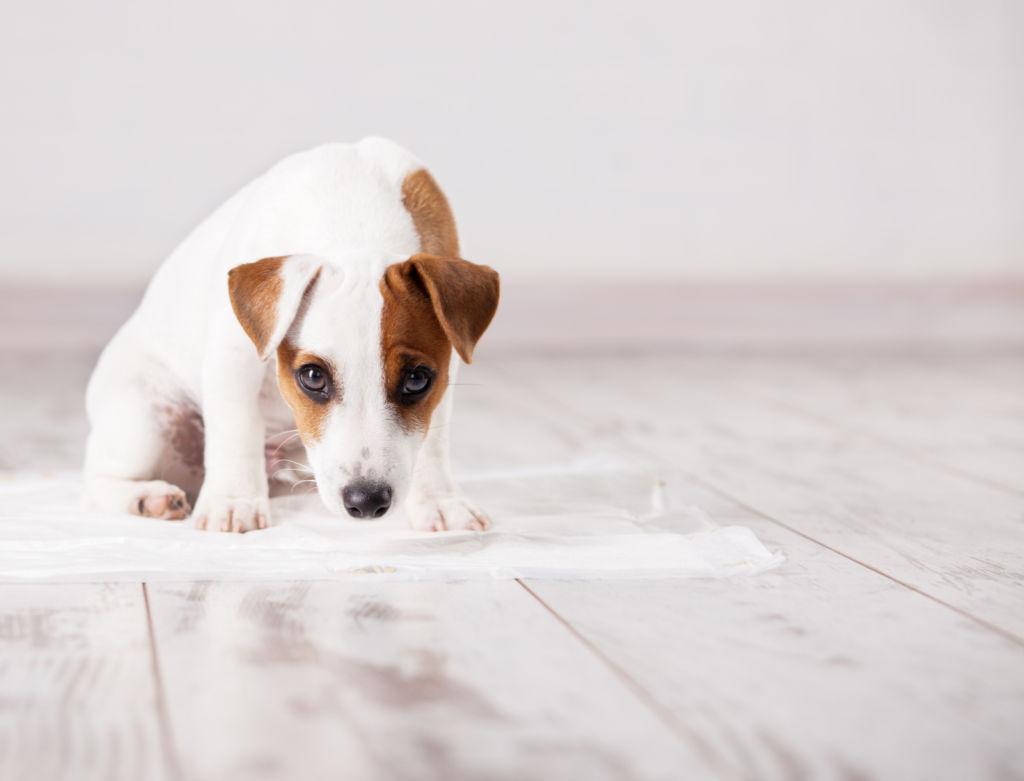 Не списывайте собственные ошибки на собаку
