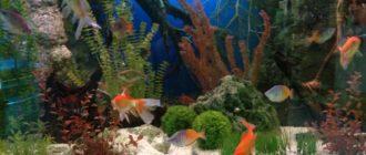 5 разновидностей заднего фона на аквариум и как правильно приклеить