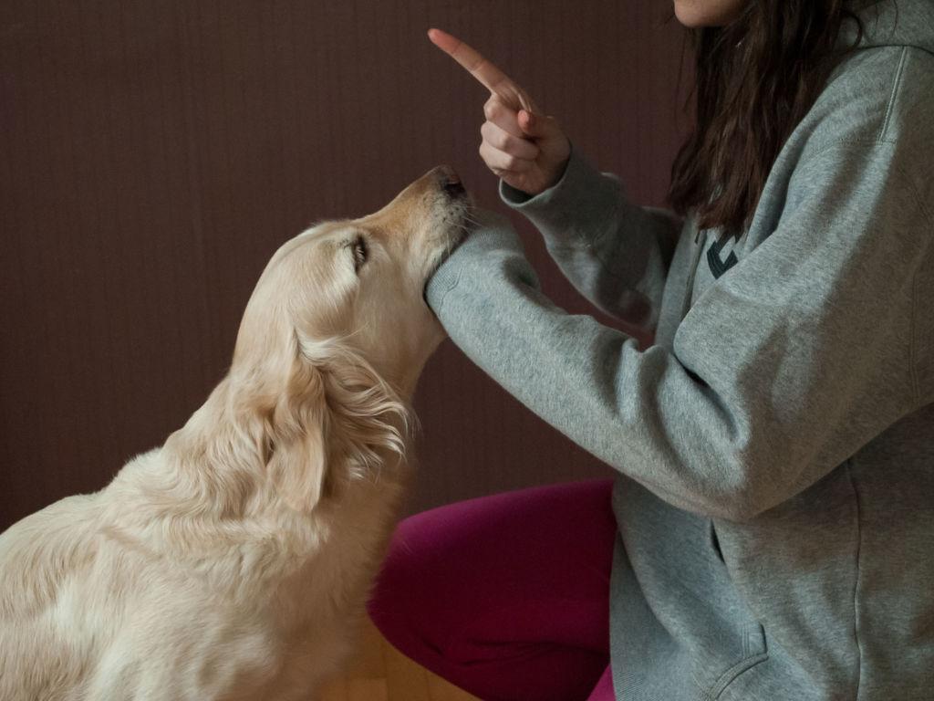 Почему собака лижет хозяину руки, ноги и лицо