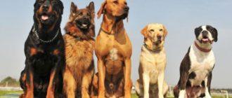 Самые популярные породы собак в мире