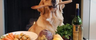 Кормление собаки натуралкой