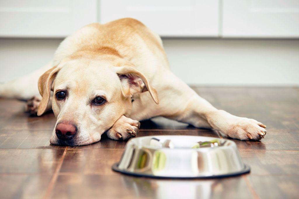 Миску с недоеденной пищей нужно убрать через 20 минут