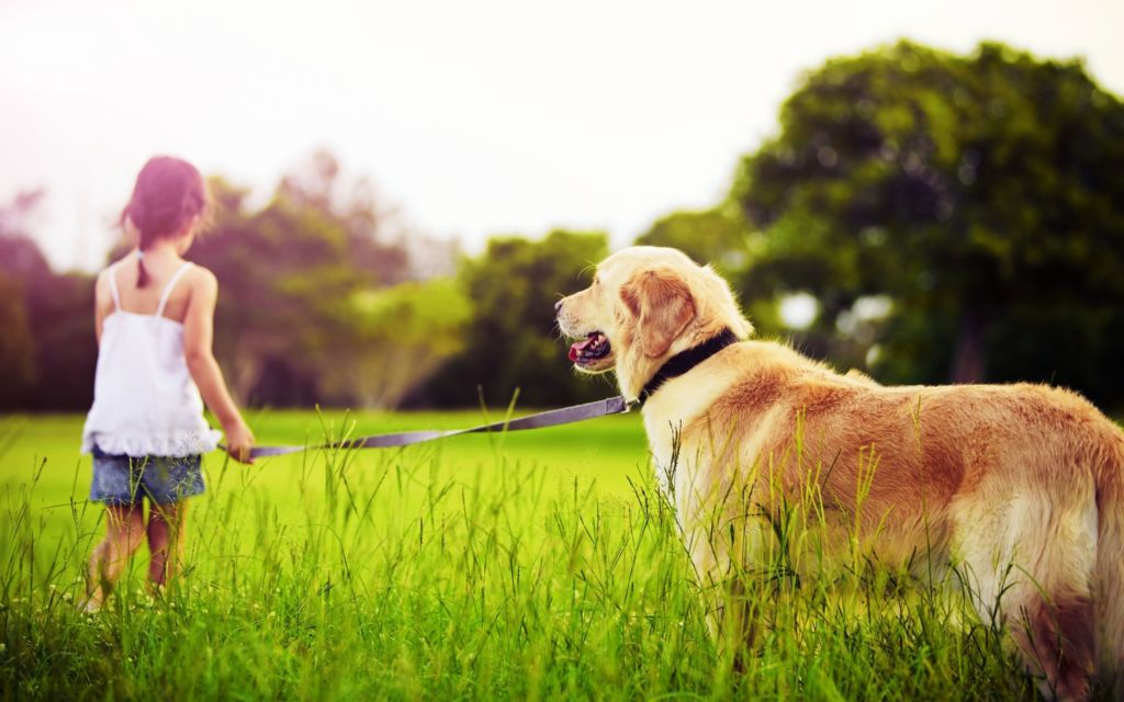 У лабрадора характер – это гармоничное сочетание дружелюбия, преданности и любви к хозяину