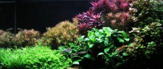 Аквариумные растения для начинающих и варианты декораций