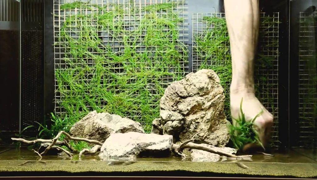Оформления аквариума на 100 литров