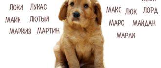 Клички и имена для собак мальчиков и девочек разных пород