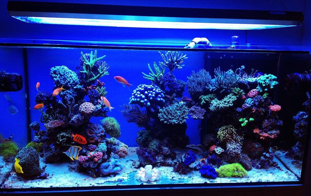 Обустройство морского аквариума своими руками