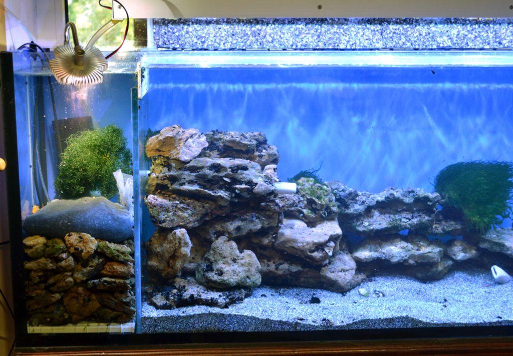 После наполнения водой и до запуска рыб аквариум должен отстояться неделю