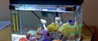 Что нужно для аквариума и как правильно запустить новый аквариум