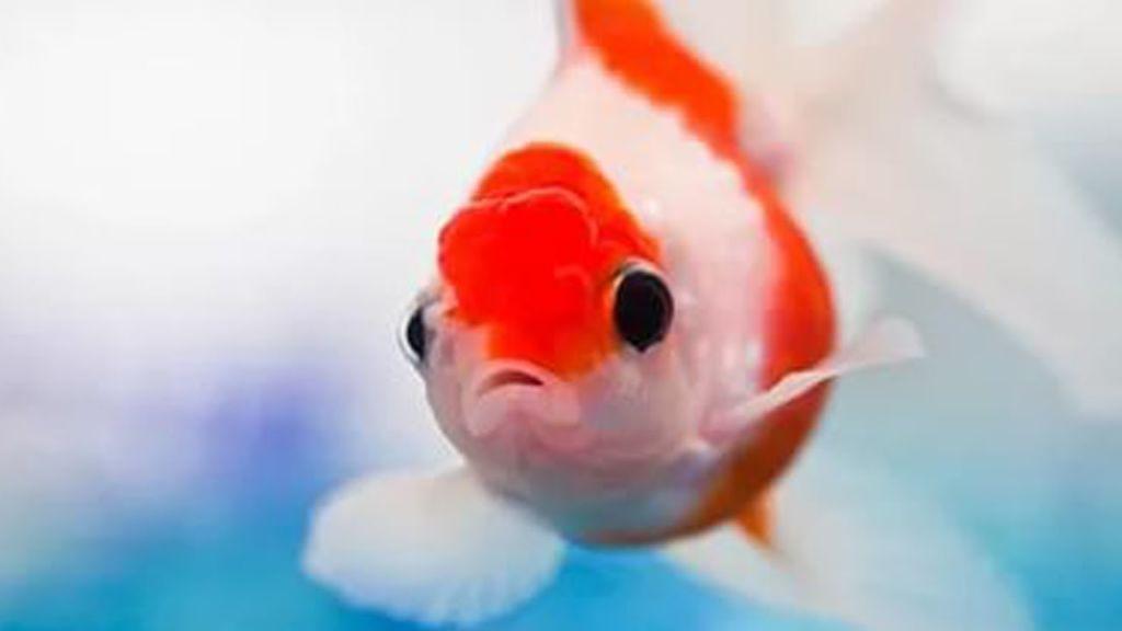 Ученые объясняют, что рыбы мыслят образами