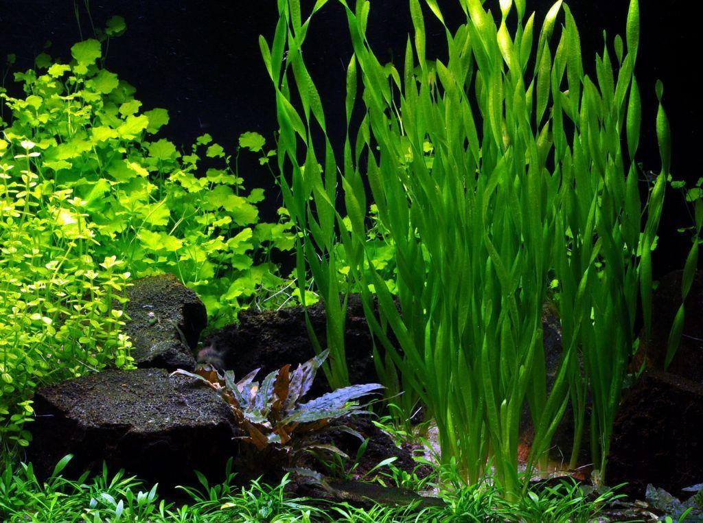 Свет необходим для здоровой атмосферы в аквариуме и роста растений