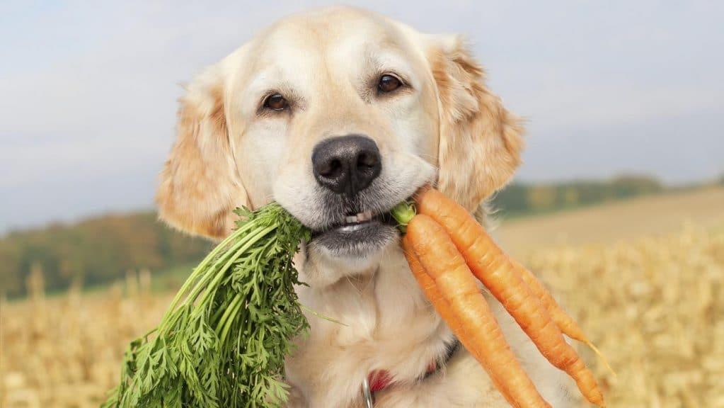 Овощи собакам не вредны, и даже рекомендованы для питания