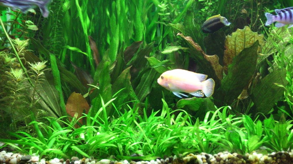 У рыб вполне развита как долговременная, так и короткая память