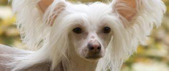 Самые смешные породы собак